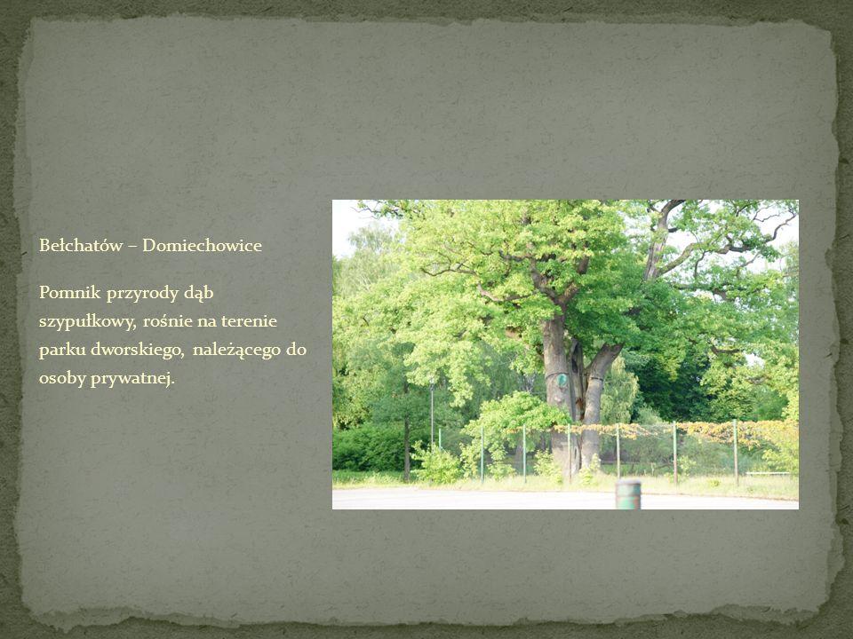 Bełchatów – Domiechowice Pomnik przyrody dąb szypułkowy, rośnie na terenie parku dworskiego, należącego do osoby prywatnej.