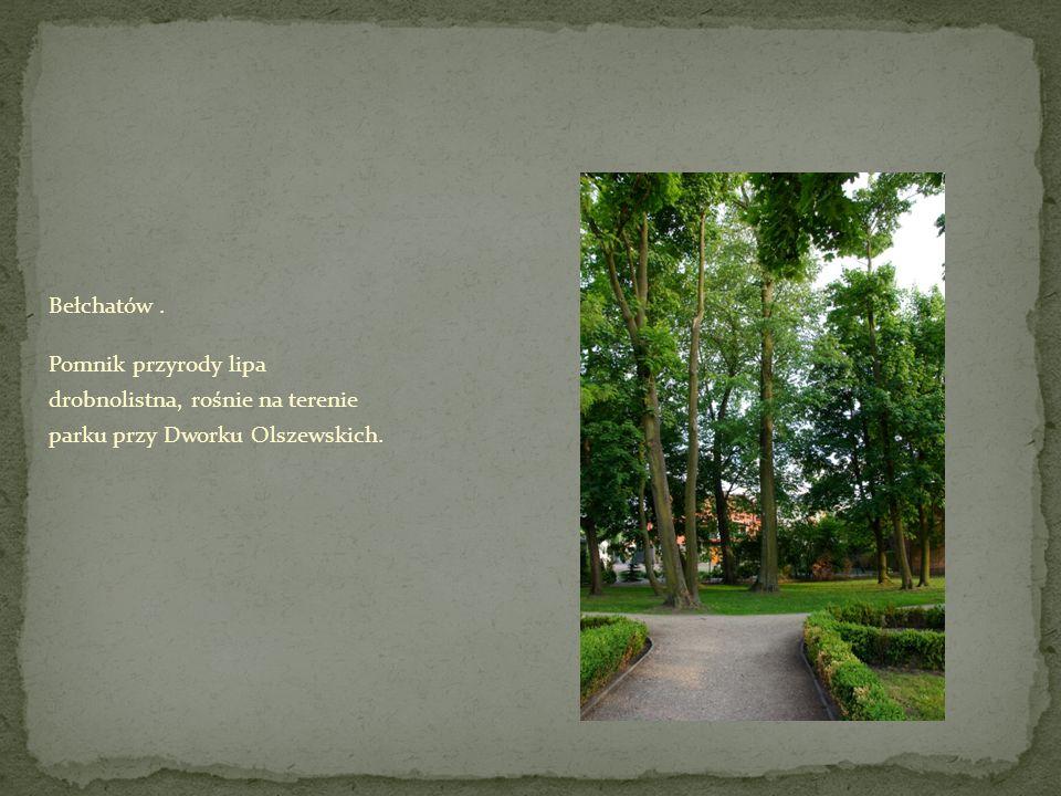 Bełchatów. Pomnik przyrody lipa drobnolistna, rośnie na terenie parku przy Dworku Olszewskich.