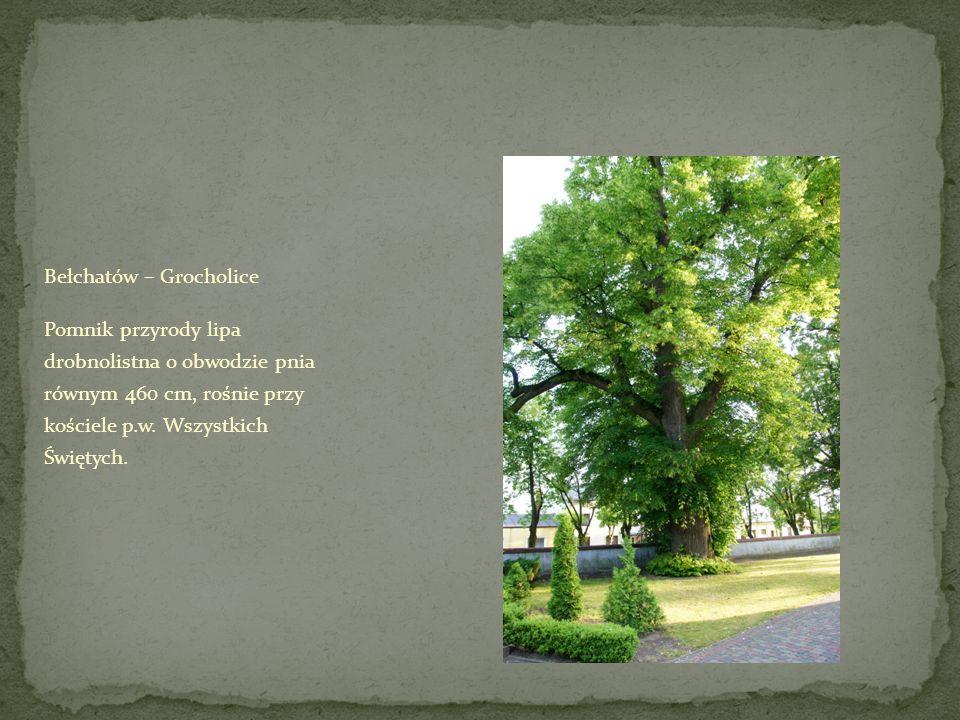 Bełchatów – Grocholice Pomnik przyrody lipa drobnolistna o obwodzie pnia równym 460 cm, rośnie przy kościele p.w.
