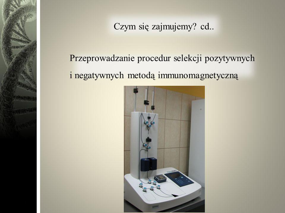 Czym się zajmujemy? cd.. Przeprowadzanie procedur selekcji pozytywnych i negatywnych metodą immunomagnetyczną