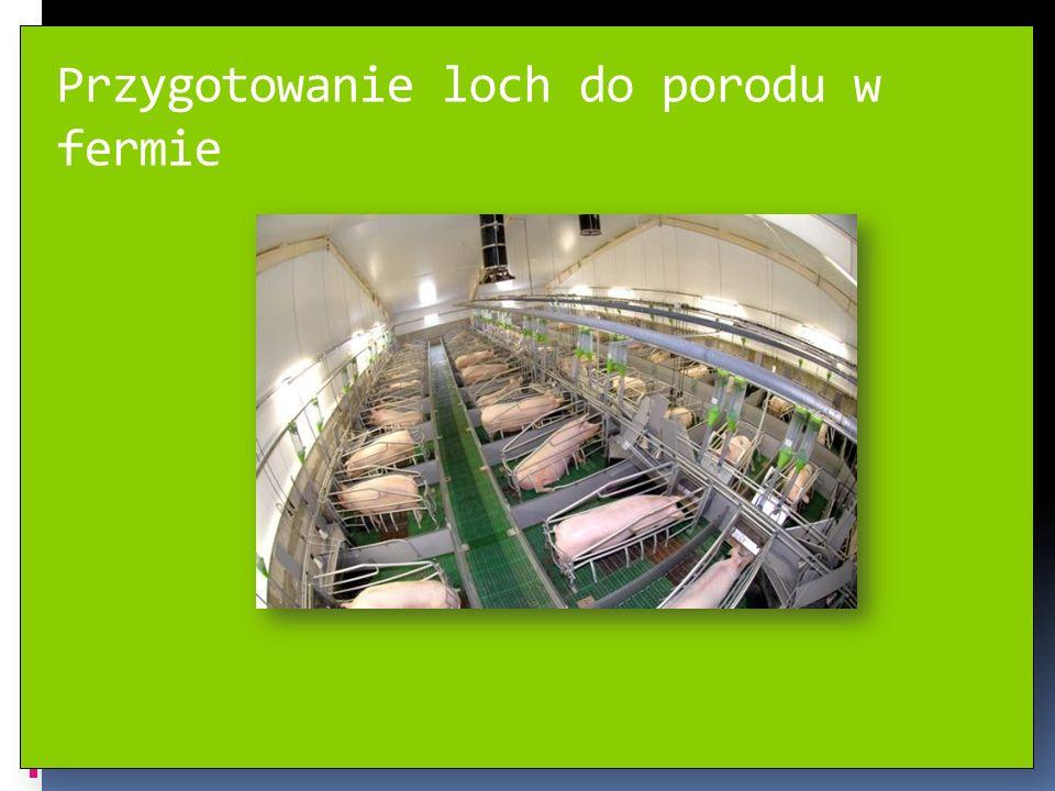 Przygotowanie loch do porodu w fermie