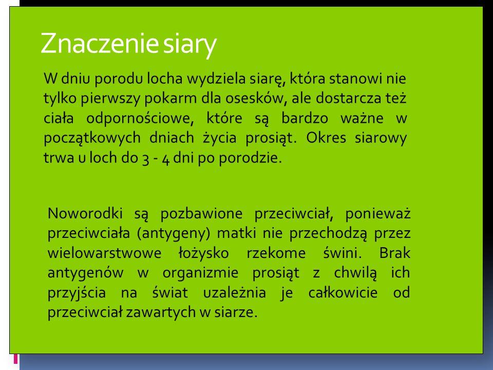 Znaczenie siary W dniu porodu locha wydziela siarę, która stanowi nie tylko pierwszy pokarm dla osesków, ale dostarcza też ciała odpornościowe, które
