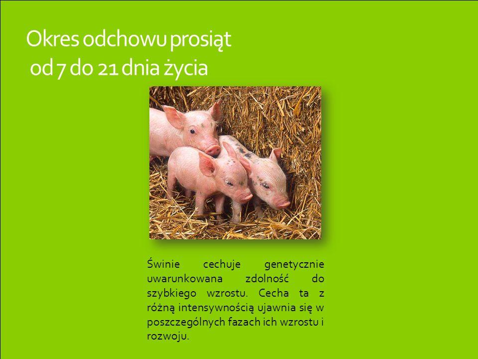 Okres odchowu prosiąt od 7 do 21 dnia życia Świnie cechuje genetycznie uwarunkowana zdolność do szybkiego wzrostu. Cecha ta z różną intensywnością uja