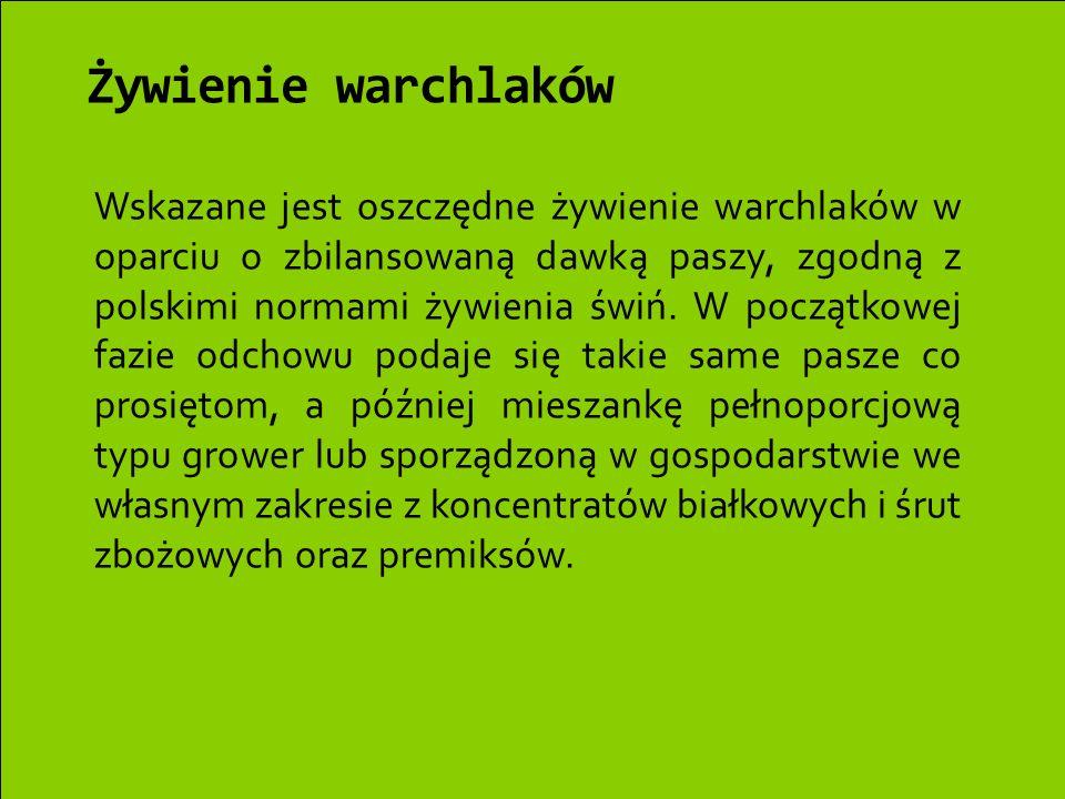 Żywienie warchlaków Wskazane jest oszczędne żywienie warchlaków w oparciu o zbilansowaną dawką paszy, zgodną z polskimi normami żywienia świń. W począ
