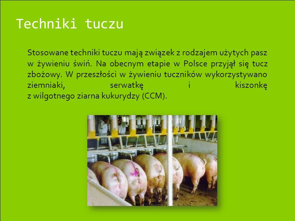 Techniki tuczu Stosowane techniki tuczu mają związek z rodzajem użytych pasz w żywieniu świń. Na obecnym etapie w Polsce przyjął się tucz zbożowy. W p