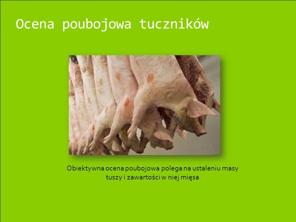 Ocena poubojowa tuczników Obiektywna ocena poubojowa polega na ustaleniu masy tuszy i zawartości w niej mięsa