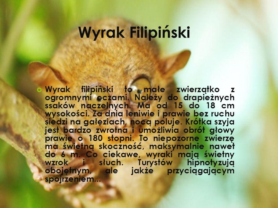 Wyrak filipiński to małe zwierzątko z ogromnymi oczami. Należy do drapieżnych ssaków naczelnych. Ma od 15 do 18 cm wysokości. Za dnia leniwie i prawie