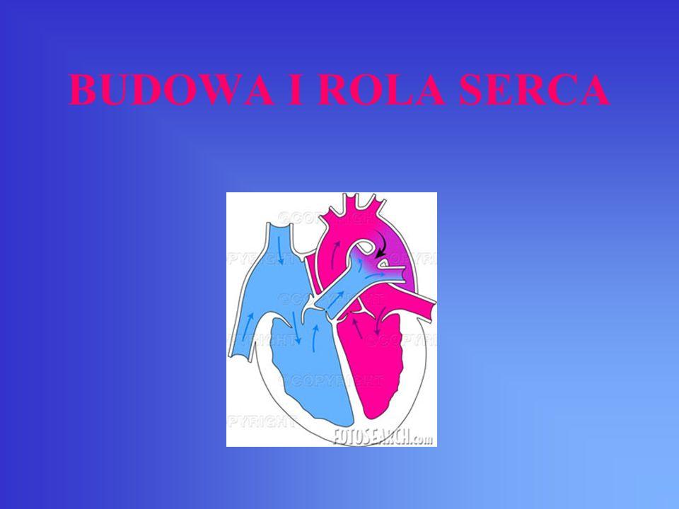 Serce – zbudowany z tkanki mięśniowej centralny narząd układu krwionośnego człowieka i zwierząt pompujący krew.