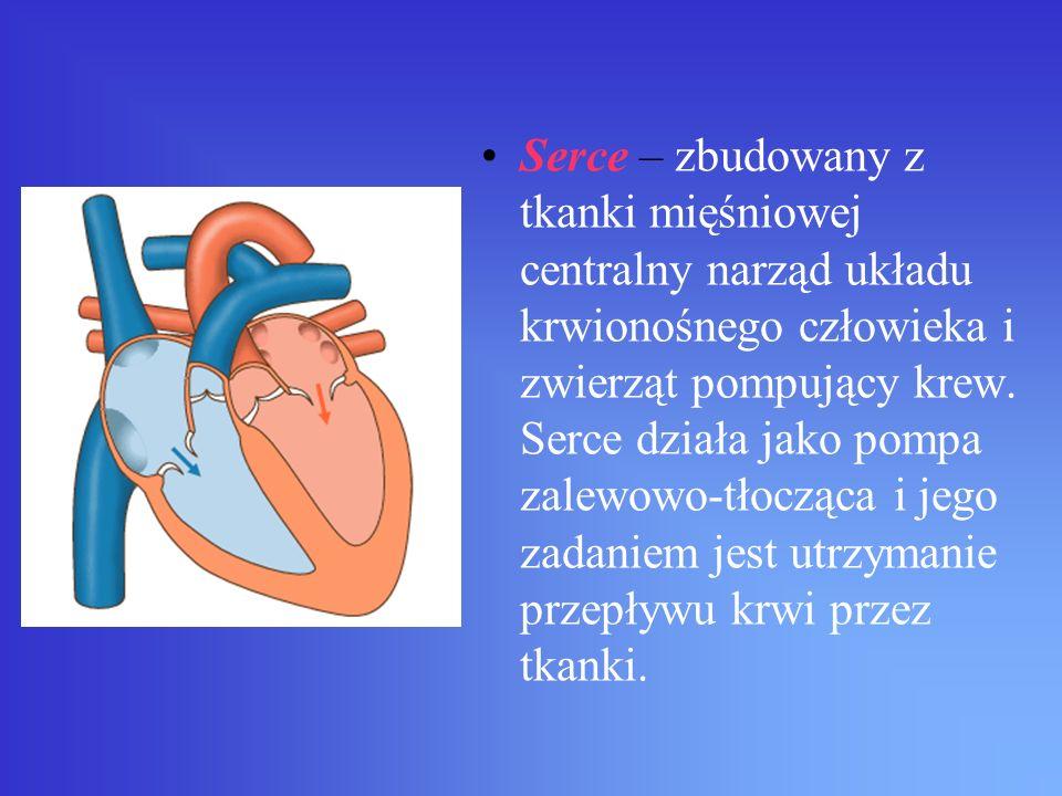 Serce – zbudowany z tkanki mięśniowej centralny narząd układu krwionośnego człowieka i zwierząt pompujący krew. Serce działa jako pompa zalewowo-tłocz