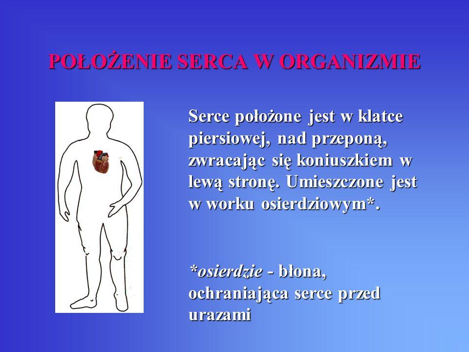 SCHEMAT ZEWNĘTRZNEJ BUDOWY SERCA aorta tętnica płucna lewa tętnica płucna prawa żyły płucne żyła główna dolna żyła główna górna tętnice wieńcowe** worek osierdziowy