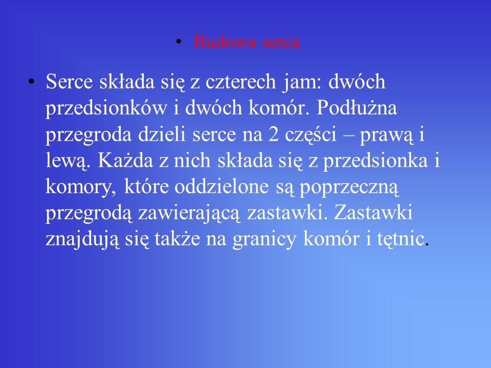 MODEL BUDOWY SERCA prawy przedsionek prawa komora lewy przedsionek lewa komora zastawka trójdzielna zastawka dwudzielna