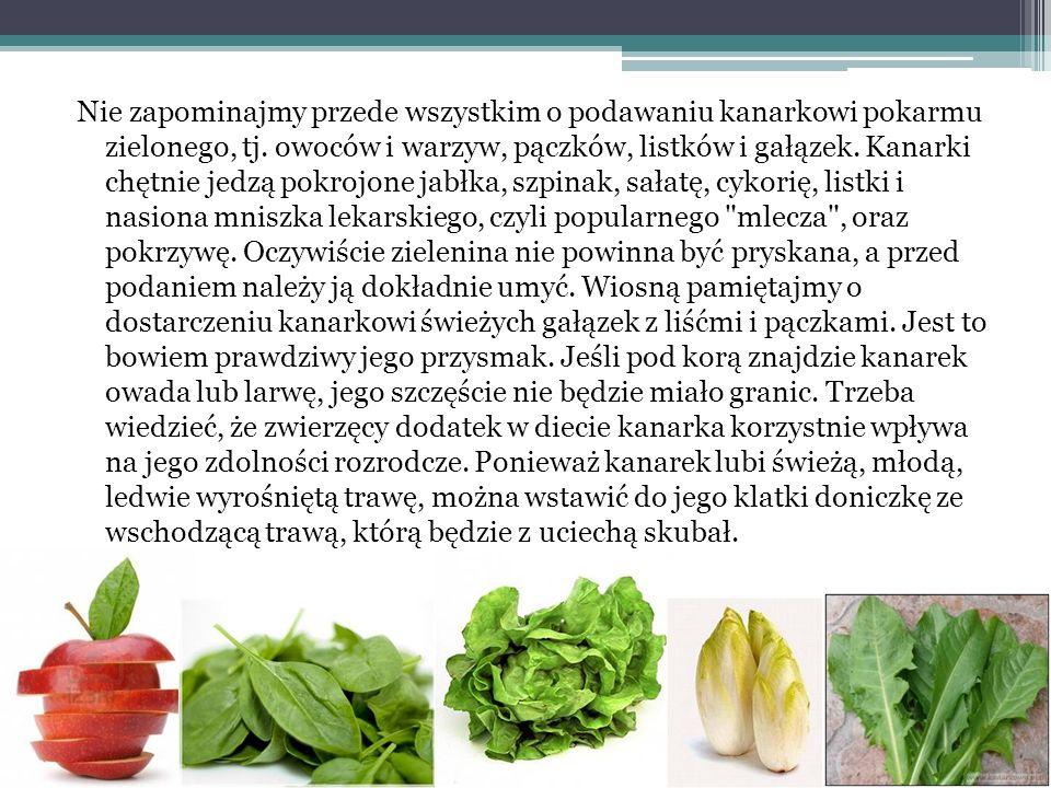 Nie zapominajmy przede wszystkim o podawaniu kanarkowi pokarmu zielonego, tj. owoców i warzyw, pączków, listków i gałązek. Kanarki chętnie jedzą pokro