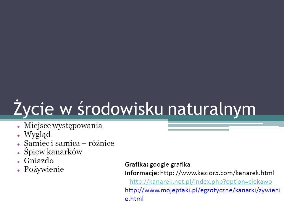 Życie w środowisku naturalnym Miejsce występowania Wygląd Samiec i samica – różnice Śpiew kanarków Gniazdo Pożywienie Grafika: google grafika Informac