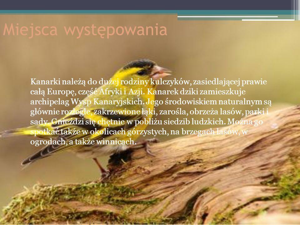 Miejsca występowania Kanarki należą do dużej rodziny kulczyków, zasiedlającej prawie całą Europę, część Afryki i Azji. Kanarek dziki zamieszkuje archi