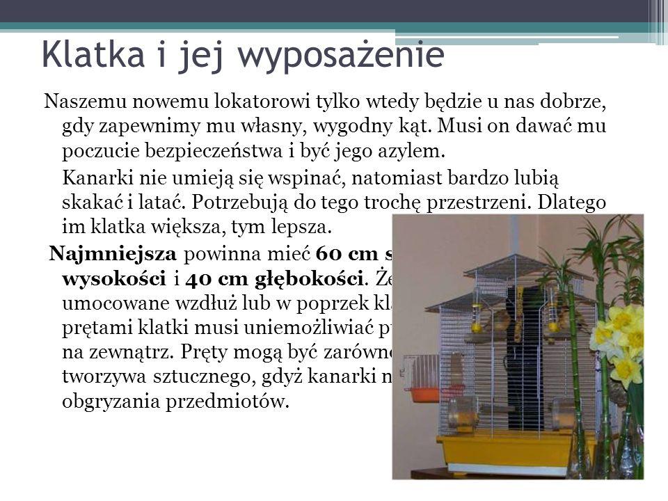 Kanarek Czubaty