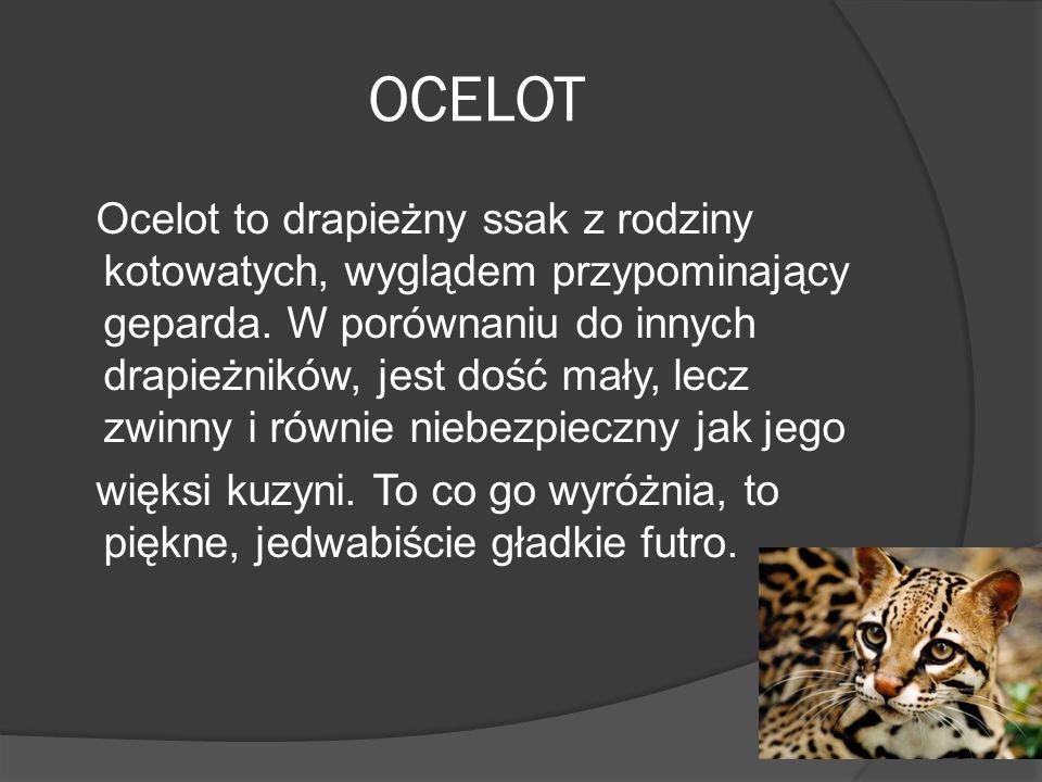 LEW Wszystkie lwice w stadzie są spokrewnione ze sobą. Lew może biec z prędkością nawet do 80km/h! Aby utrzymać intruzów w bezpiecznej odległości od s