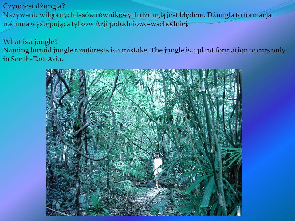 Czym jest dżungla? Nazywanie wilgotnych lasów równikowych dżunglą jest błędem. Dżungla to formacja roślinna występująca tylko w Azji południowo-wschod