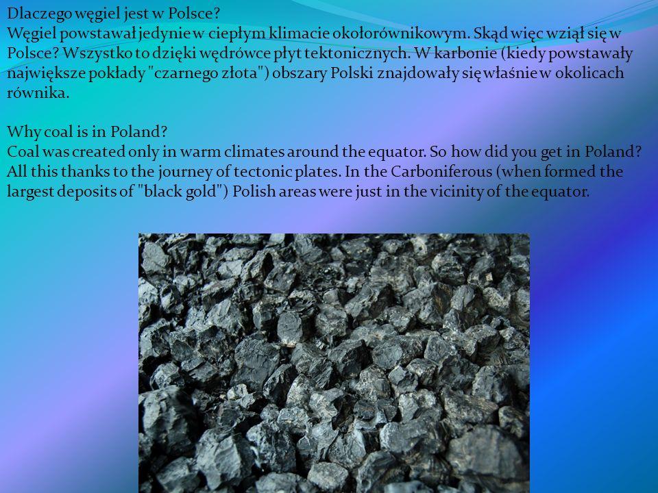 Dlaczego węgiel jest w Polsce? Węgiel powstawał jedynie w ciepłym klimacie okołorównikowym. Skąd więc wziął się w Polsce? Wszystko to dzięki wędrówce