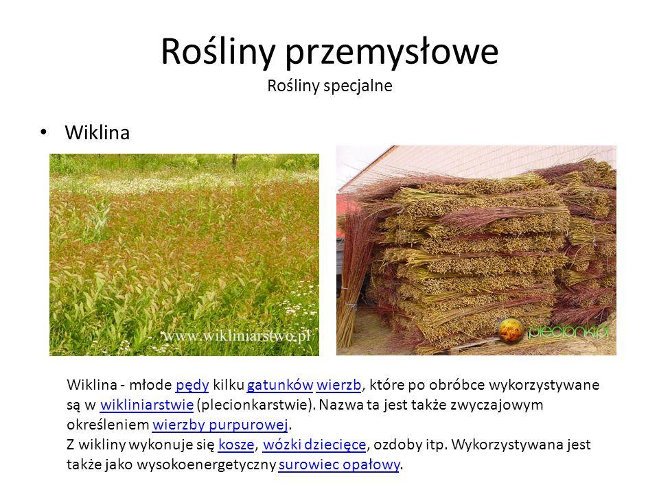 Rośliny przemysłowe Rośliny specjalne Wiklina Wiklina - młode pędy kilku gatunków wierzb, które po obróbce wykorzystywane są w wikliniarstwie (plecionkarstwie).