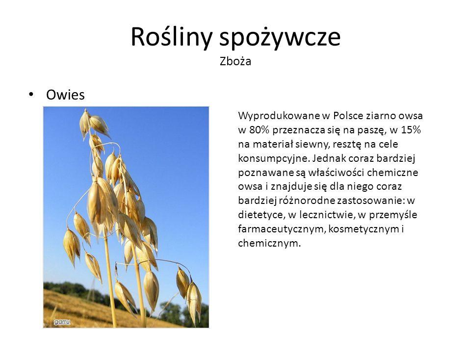 Rośliny spożywcze Zboża Owies Wyprodukowane w Polsce ziarno owsa w 80% przeznacza się na paszę, w 15% na materiał siewny, resztę na cele konsumpcyjne.