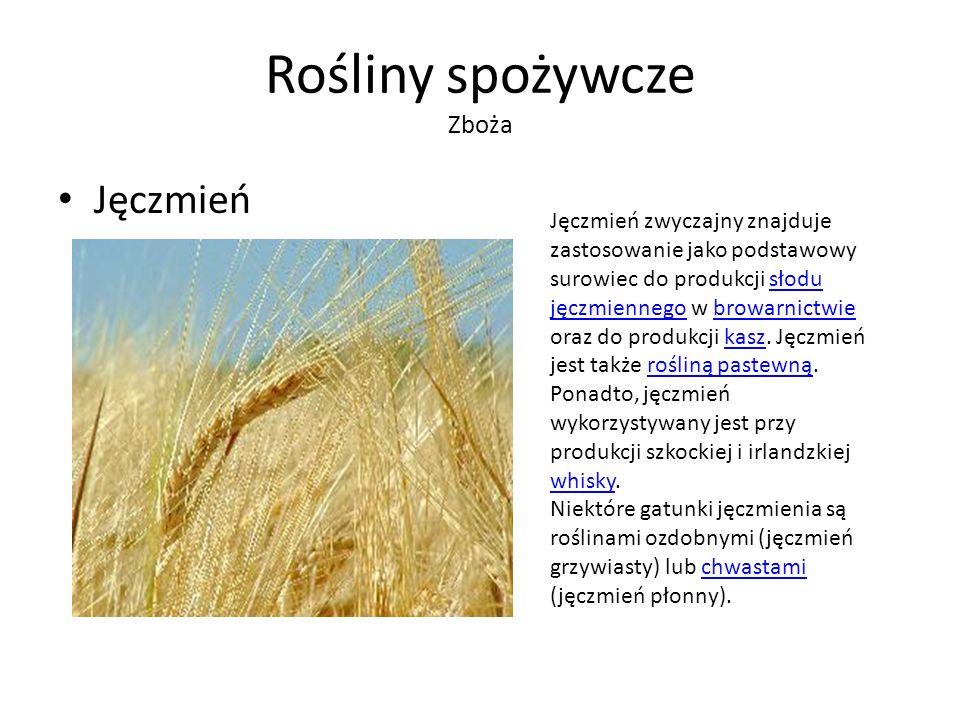 Rośliny spożywcze Zboża Jęczmień Jęczmień zwyczajny znajduje zastosowanie jako podstawowy surowiec do produkcji słodu jęczmiennego w browarnictwie oraz do produkcji kasz.