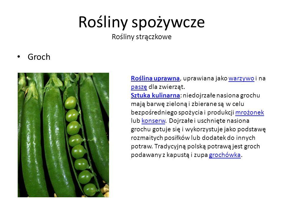 Rośliny spożywcze Rośliny strączkowe Groch Roślina uprawnaRoślina uprawna, uprawiana jako warzywo i na paszę dla zwierząt.warzywo paszę Sztuka kulinarnaSztuka kulinarna: niedojrzałe nasiona grochu mają barwę zieloną i zbierane są w celu bezpośredniego spożycia i produkcji mrożonek lub konserw.