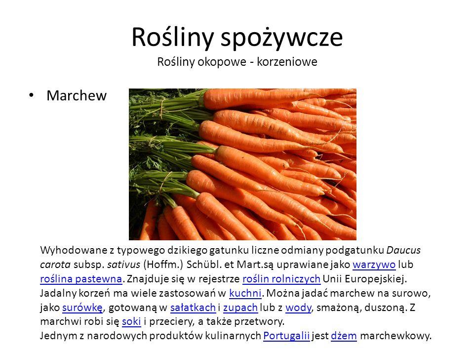 Rośliny spożywcze Rośliny okopowe - korzeniowe Marchew Wyhodowane z typowego dzikiego gatunku liczne odmiany podgatunku Daucus carota subsp.