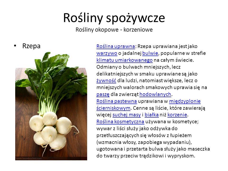 Rośliny spożywcze Rośliny okopowe - korzeniowe Rzepa Roślina uprawnaRoślina uprawna: Rzepa uprawiana jest jako warzywo o jadalnej bulwie, popularne w strefie klimatu umiarkowanego na całym świecie.