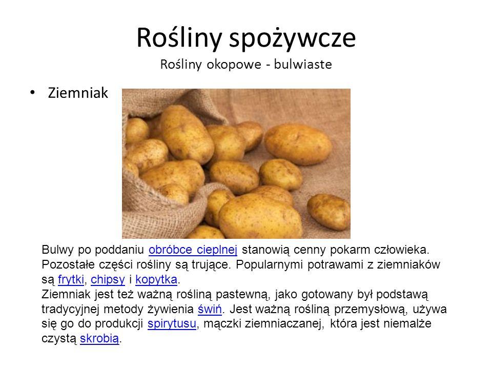 Rośliny spożywcze Rośliny okopowe - bulwiaste Ziemniak Bulwy po poddaniu obróbce cieplnej stanowią cenny pokarm człowieka.