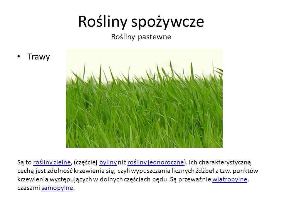 Rośliny spożywcze Rośliny pastewne Trawy Są to rośliny zielne, (częściej byliny niż rośliny jednoroczne).
