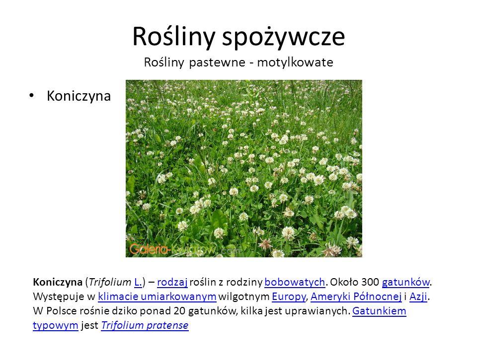 Rośliny spożywcze Rośliny pastewne - motylkowate Koniczyna Koniczyna (Trifolium L.) – rodzaj roślin z rodziny bobowatych.