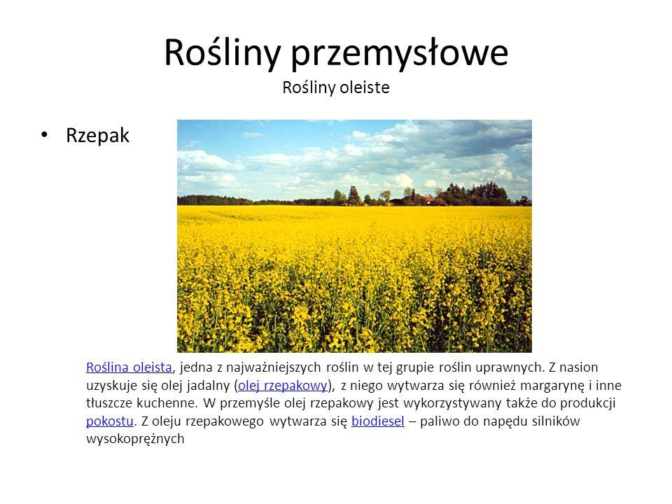 Rośliny przemysłowe Rośliny oleiste Rzepak Roślina oleistaRoślina oleista, jedna z najważniejszych roślin w tej grupie roślin uprawnych.