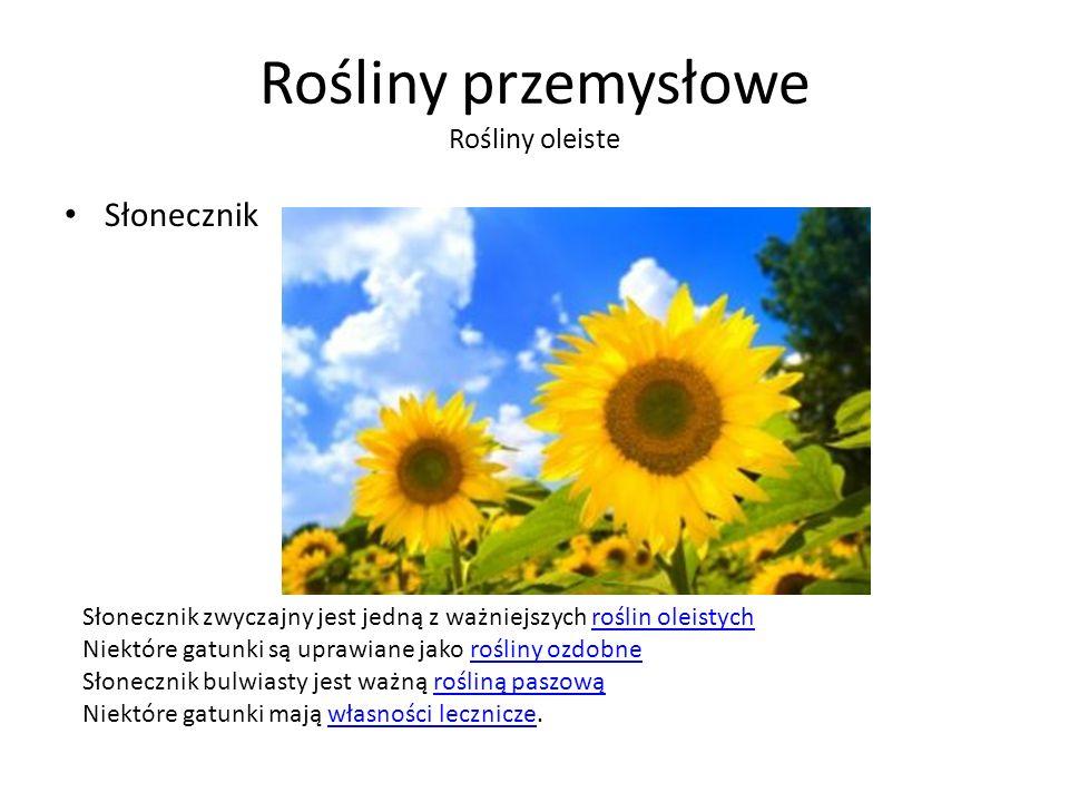 Rośliny przemysłowe Rośliny oleiste Słonecznik Słonecznik zwyczajny jest jedną z ważniejszych roślin oleistychroślin oleistych Niektóre gatunki są uprawiane jako rośliny ozdobnerośliny ozdobne Słonecznik bulwiasty jest ważną rośliną paszowąrośliną paszową Niektóre gatunki mają własności lecznicze.własności lecznicze