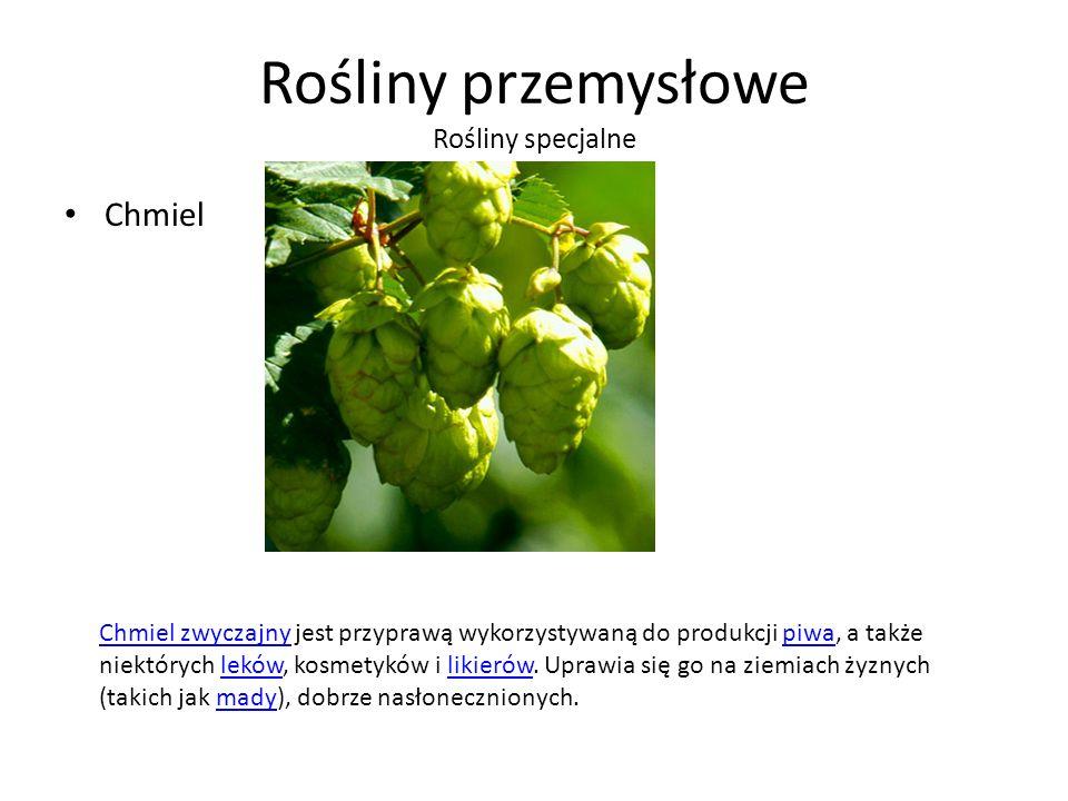 Rośliny przemysłowe Rośliny specjalne Chmiel Chmiel zwyczajnyChmiel zwyczajny jest przyprawą wykorzystywaną do produkcji piwa, a także niektórych leków, kosmetyków i likierów.
