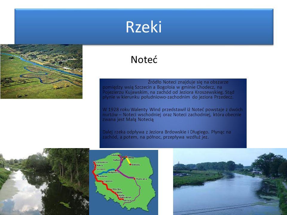 Rzeki Źródło Noteci znajduje się na obszarze pomiędzy wsią Szczecin a Bogołoia w gminie Chodecz, na Pojezierzu Kujawskim, na zachód od Jeziora Kroszew