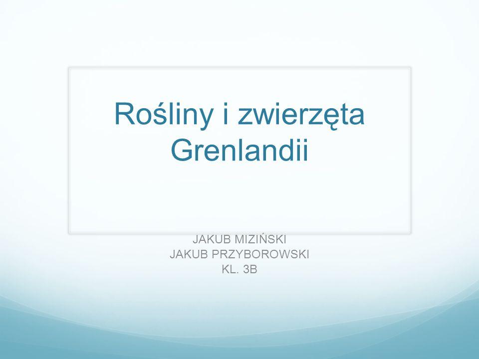 Rośliny i zwierzęta Grenlandii JAKUB MIZIŃSKI JAKUB PRZYBOROWSKI KL. 3B