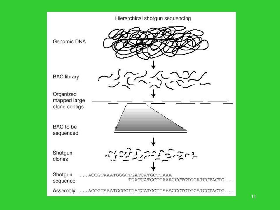 10 Metoda Konsorcjum map-based, BAC-based, clone-by-clone Pozyskiwanie materiału genetycznego. Budowa mapy fizycznej genomu w oparciu o klony. Trawien
