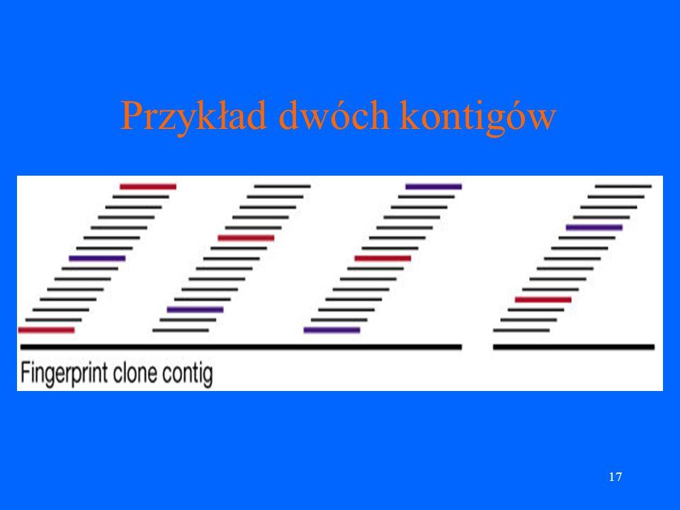 16 Mapa fizyczna, c.d. Linie papilarne klonów zostały użyte do budowy tzw. kontigów (nakładające się na siebie spójne fragmenty utworzone z klonów). K