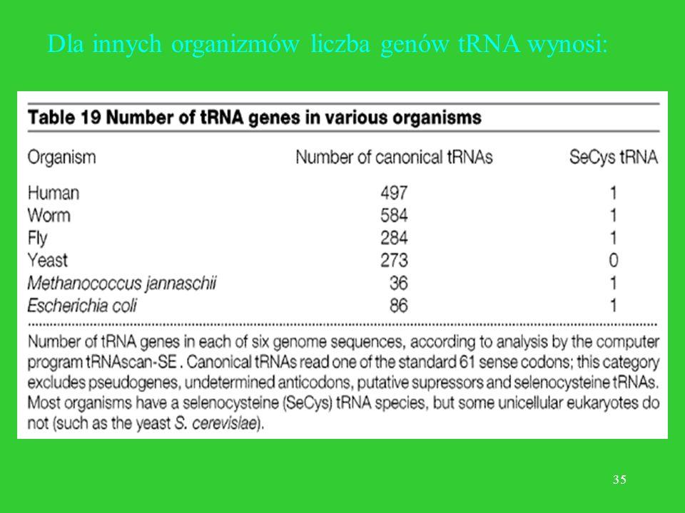 34 Przykład Klasyczne (podręcznikowe) oszacowanie liczby genów tRNA u człowieka to 1310, ale... okazało się, że jest ich w drafcie genomu tylko 497.