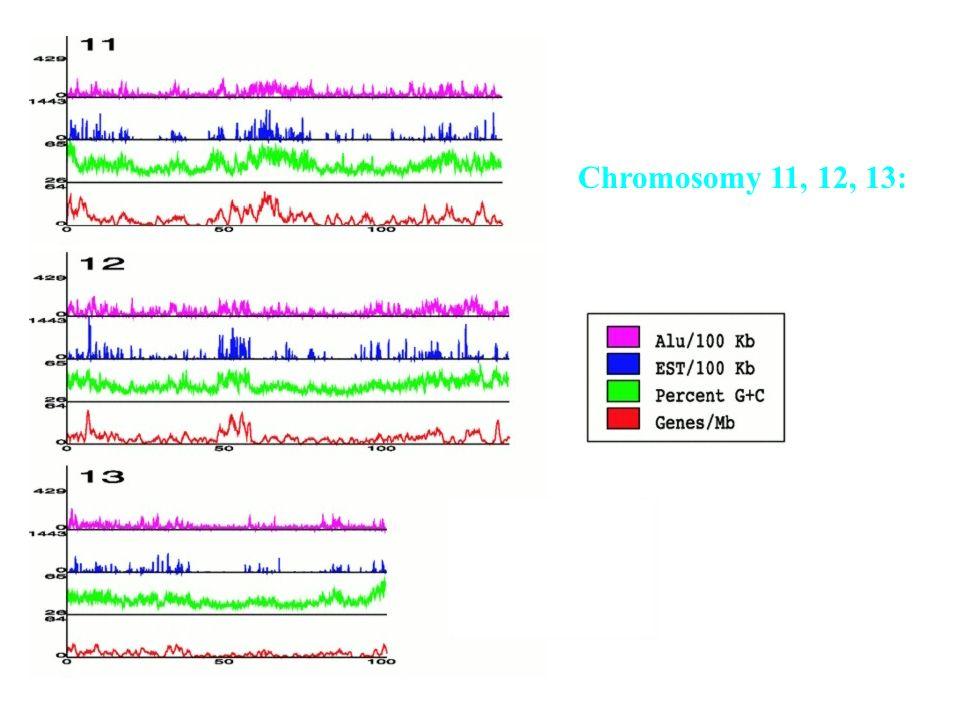67 Wstępny opis Celery chromosomów Chr. 1 Chr. 19 Chr. 21 Chr. 22 Chr. X Chr. Y
