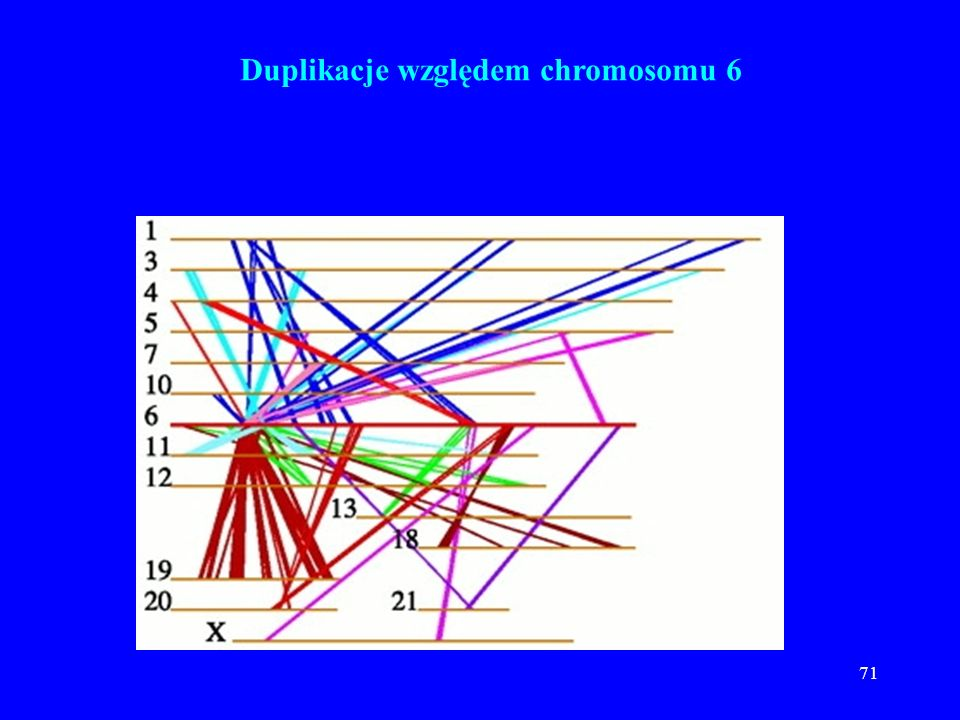 70 Duplikacje względem chromosomu 1