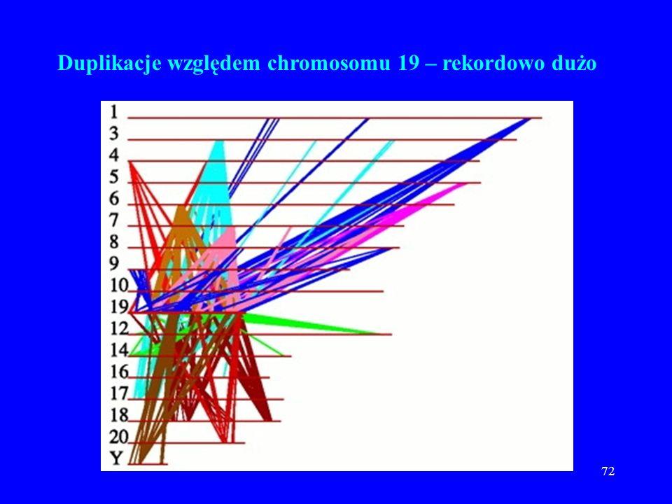 71 Duplikacje względem chromosomu 6