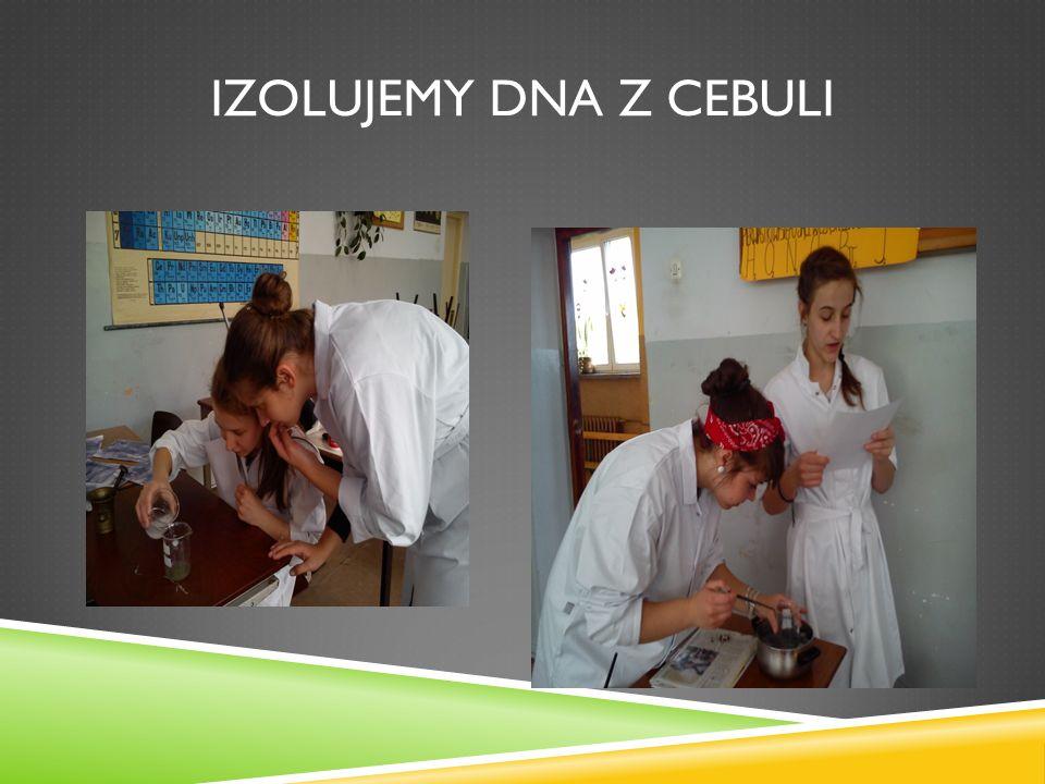IZOLUJEMY DNA Z CEBULI