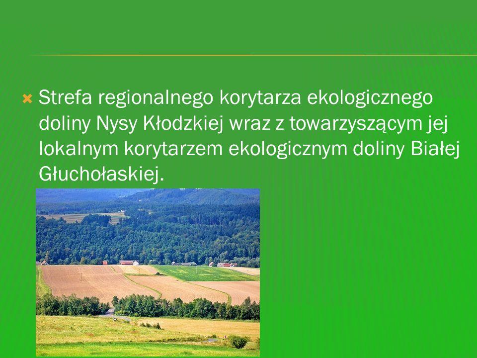 Strefa regionalnego korytarza ekologicznego doliny Nysy Kłodzkiej wraz z towarzyszącym jej lokalnym korytarzem ekologicznym doliny Białej Głuchołaskie