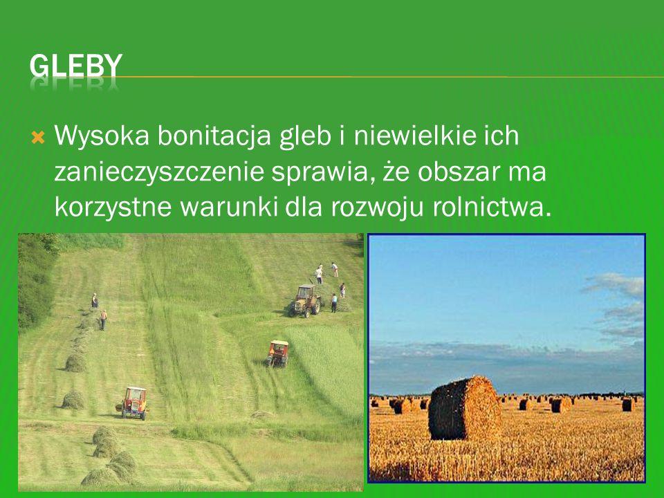 Wysoka bonitacja gleb i niewielkie ich zanieczyszczenie sprawia, że obszar ma korzystne warunki dla rozwoju rolnictwa.