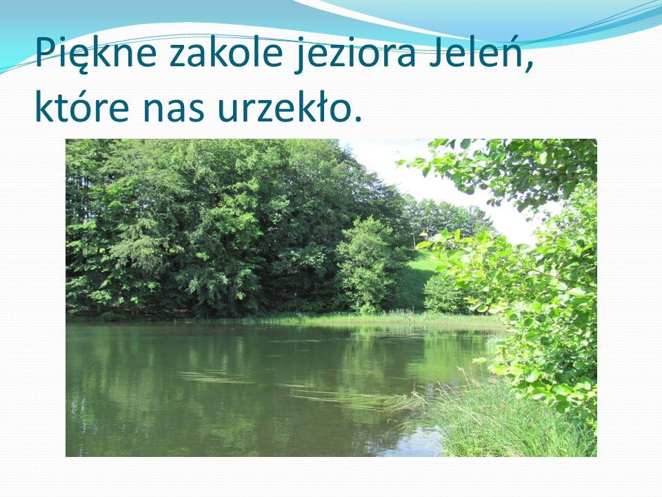 Piękne zakole jeziora Jeleń, które nas urzekło.