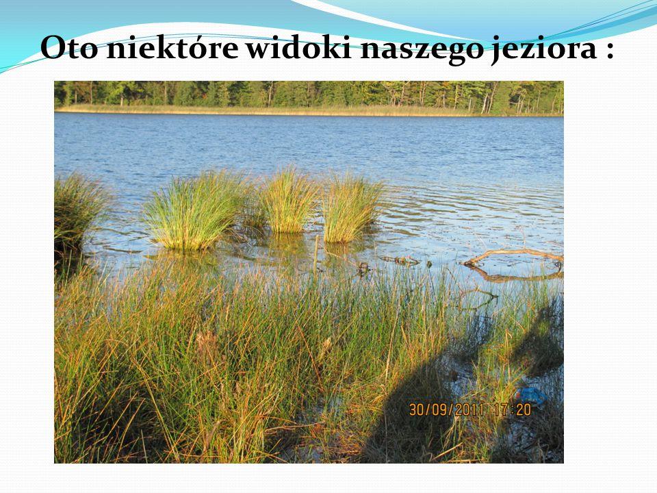Oto niektóre widoki naszego jeziora :