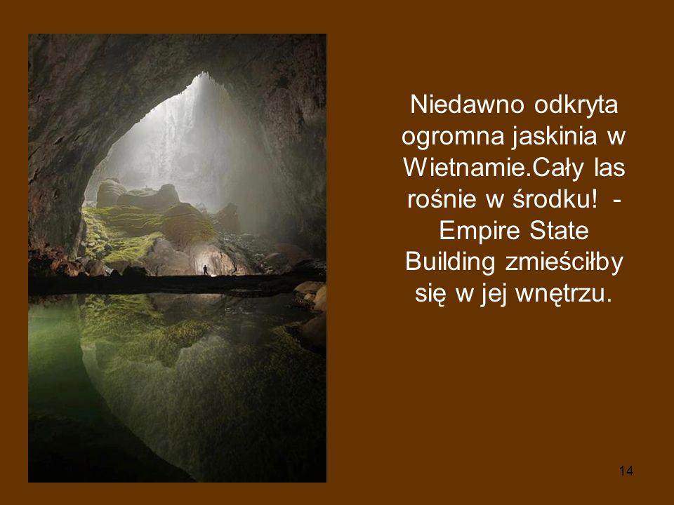 14 Niedawno odkryta ogromna jaskinia w Wietnamie.Cały las rośnie w środku! - Empire State Building zmieściłby się w jej wnętrzu.