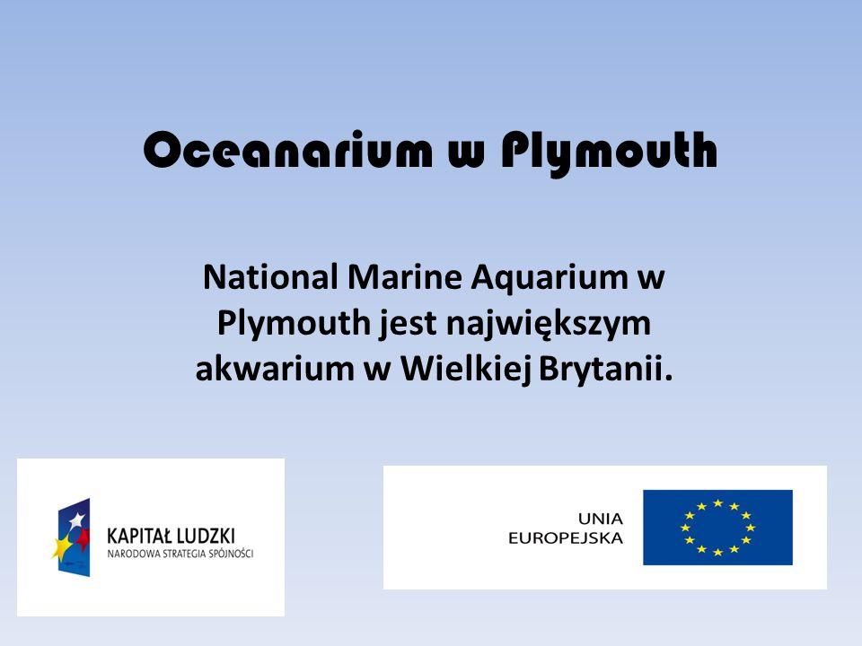 Oceanarium w Plymouth National Marine Aquarium w Plymouth jest największym akwarium w Wielkiej Brytanii.