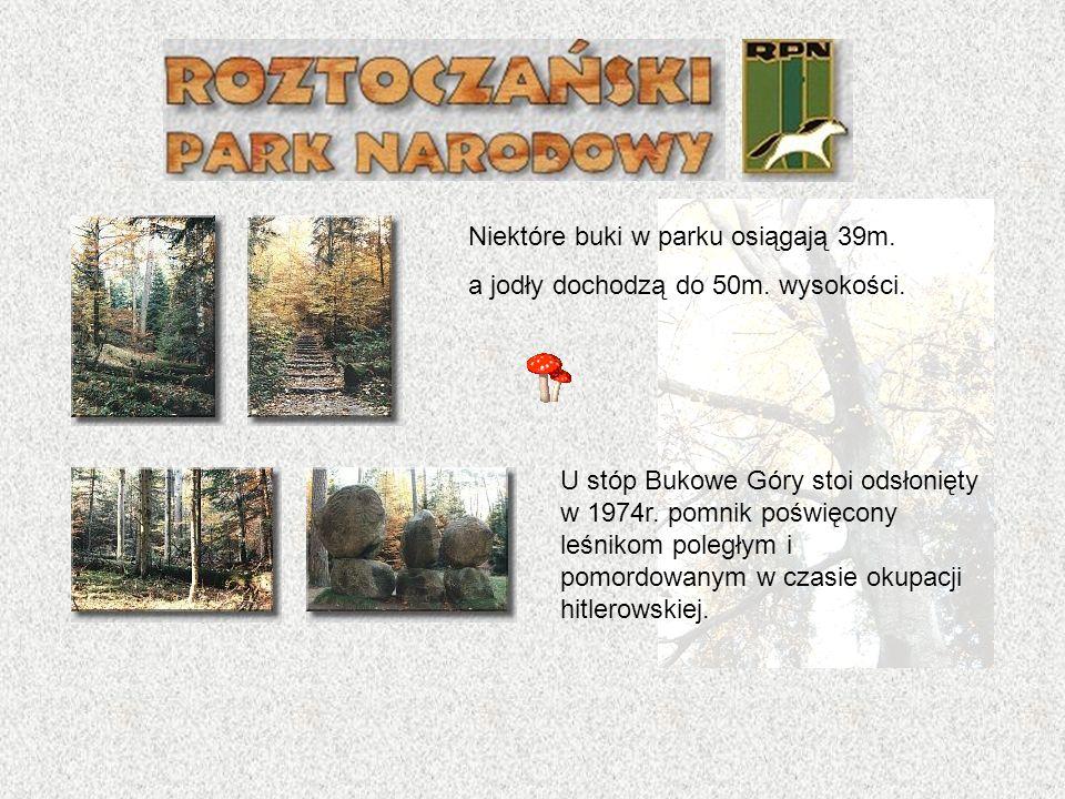 Nad Stawami Echo znajduje się także hodowla Konika Polskiego, potomka dzikiego tarpana, który niegdyś zamieszkiwał te tereny.